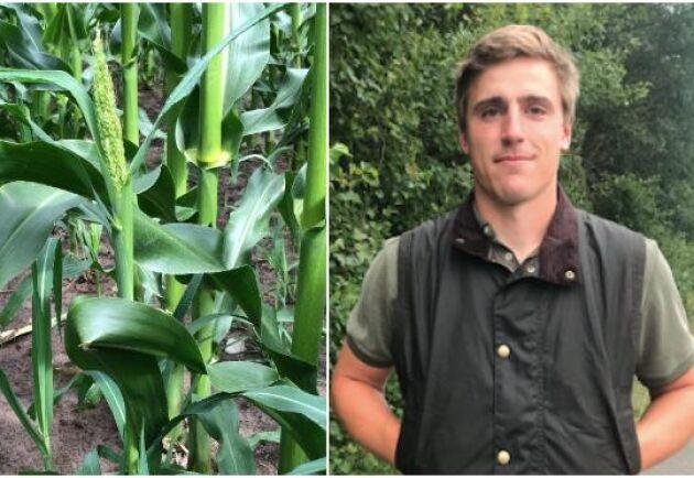 Alexander Lilliehöök studerar till agronom på Ulltuna och har tillägnat sitt kandidatarbete åt hönshirs och dess spridning.