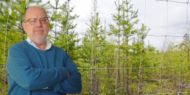 Aktivt skogsbruk viktigare än någonsin