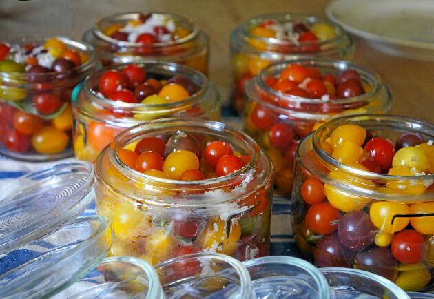 Små, stora, gula, blå eller röda. Spar tomaterna på burk till vintern.