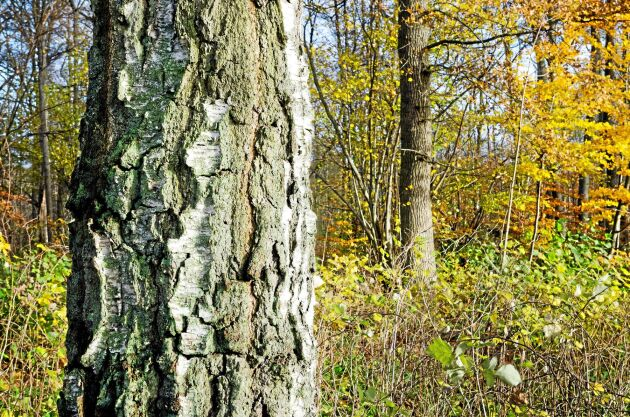 Skedemosses skogsfastighet är en del av Mittlandsskogen på Öland, som ligger på ett större sammanhängande moränområde.