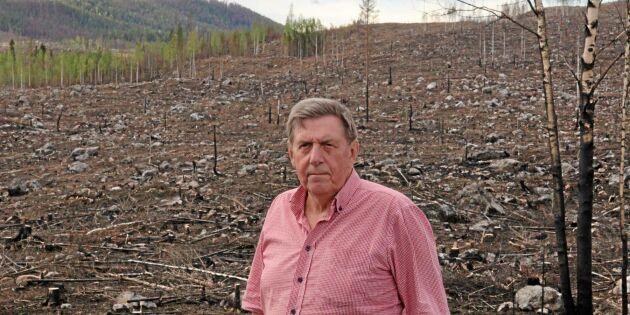 Björn siktar framåt efter branden – ny skog på gång