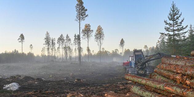 Knut Persson: För mycket energi stannar i skogen
