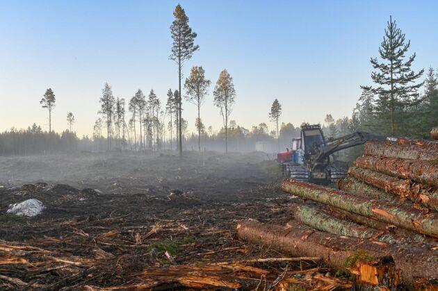 Ur klimatsynpunkt är det en fördel om en större del av tillväxten i skogen kan komma till användning, skriver Knut Persson i sin ledare.