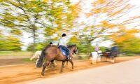 Säkrare häst i trafik med avdelad ridfil