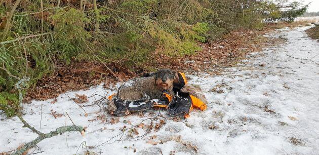Lägg ut din jacka eller något annat, som hunden känner igen doften ifrån, vid platsen som hunden försvann.