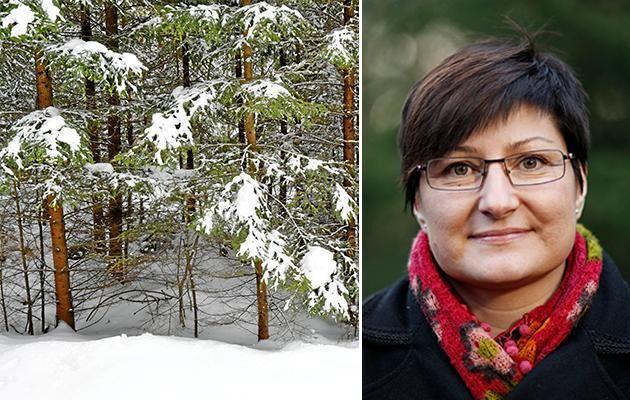 """""""Flera olika trender ger uppfattningen att politiken har tagit ett steg tillbaka och överlämnat åt aktörerna att förhandla om skogspolitiken"""", anser Camilla Sandström. Hon menar samtidigt att det läggs ett orimligt stort ansvar i markägarens knä."""