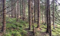 600 hektar rikskänd bohusskog till salu