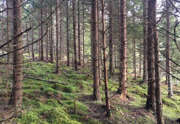 Bild från skogsegendomen Kynnefjäll i Bohuslän.