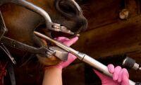 Hårdhänt hästtandvård går till åtal