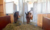 Hästnäringen travar på