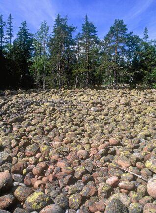 Istida klapperstensfält i Skuleskogens nationalpark, här orörda.