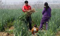 Växande underskott av livsmedel i Kina