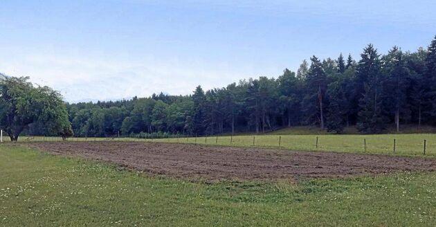 Men den enklare ridbanan belägen på gården får hästarna motion.