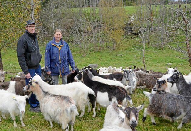 Anders och Elisabet Forsdahl satsade på produktion av getmjölk för konsumtion som komplement till växtodling och nötköttsproduktion.
