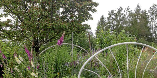 Bäddat för blomster i Siljansnäs – i en äkta blomsäng