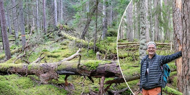 Så känner du igen en riktig urskog