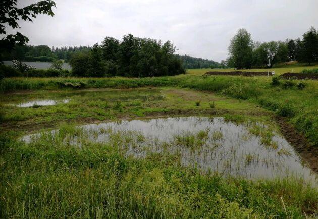 En våtmark som Holger van der Woude har anlagt och som nu tömts på sediment.