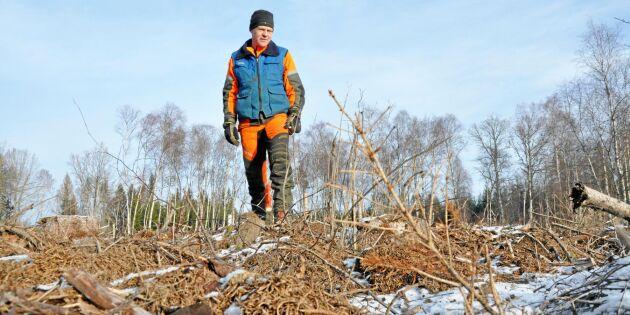 Skogsägare drabbad av vildsvin – nu krävs nya strategier