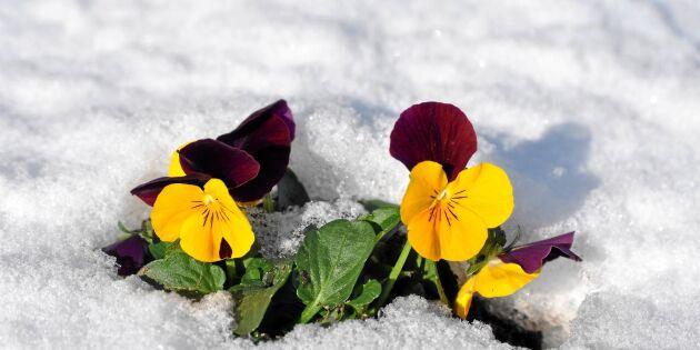 Februari: Håll koll på detta i trädgården just nu