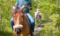 Mobilprat på hästrygg straffade sig