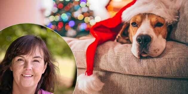 """Krönika: """"Så här ser ett äkta julfirande ut – i verkligheten"""""""