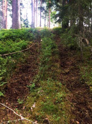 Så här såg marken ut i Ockelboskogen.