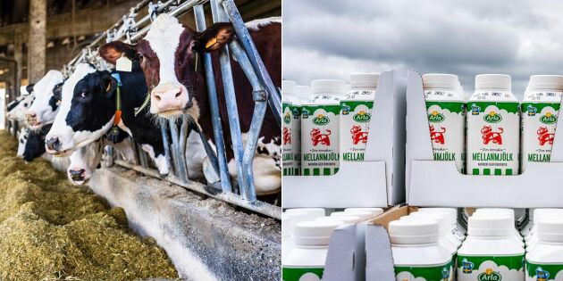 Oförändrat mjölkpris till Arlas bönder