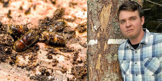 Skogsägare JO-anmäler myndigheter för barkborrar