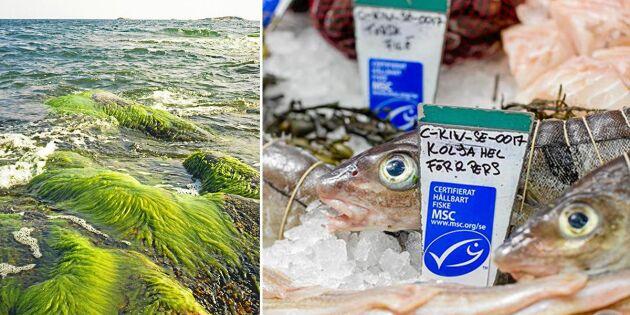 Kravet: Omedelbart fiskestopp för Östersjötorsken