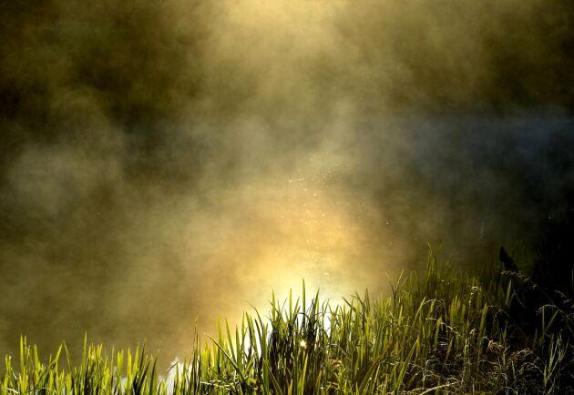 Dimmor skymmer sikten inför 2019 - ett ödesår för det svenska lantbruket.