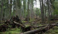 LRF måste ta skogens alla värden på allvar