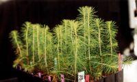 Världsrekordförsök i plantering blev succé