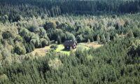 Mer distansägd skog