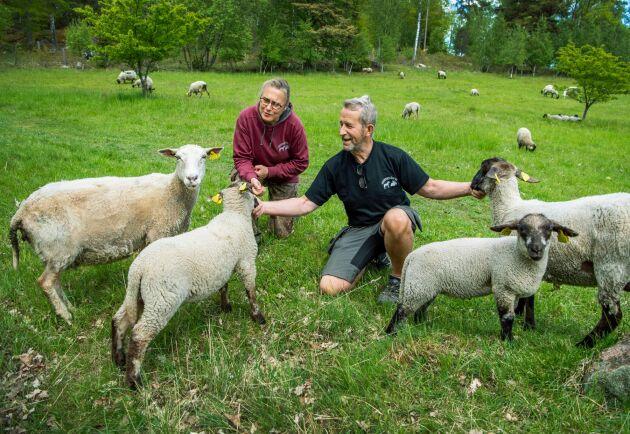 Titti och Lennart Jöngren på Grindtorps gård tycker det är tråkigt att de nu behövt flytta sina får eftersom de blivit stressade av alla nya besökare i naturen.