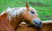 19 miljoner till hästforskning