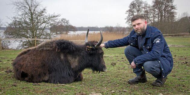 ATL TV: Magert kött från pälsiga bergsdjur