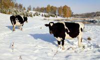 Färre företag med lantbruksdjur