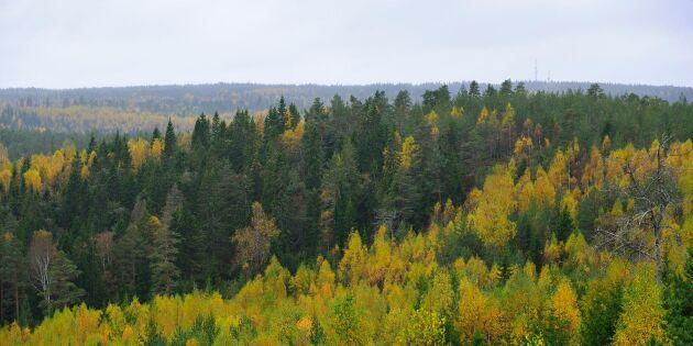 Snart kan skogsägare fota med drönare