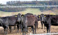 EU sägs sockra handelsbud med nötkött