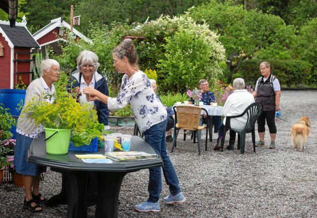 Till Kulbackens koloniområde kom många besökare för att inspireras av koloniträdgårdarna, ta en kopp kaffe eller köpa nyskördade grönsaker.