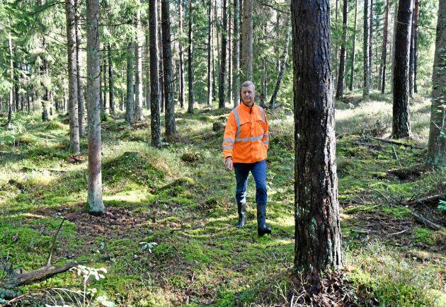 Efter att ha gått in i väggen jobbar Lars Nilsson med det han gillar bäst: skog. Här har han underröjt inför en kommande gallring.