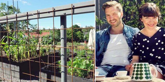Skydda odlingen med armeringsjärn – och håll rådjuren ute