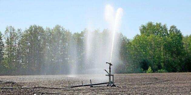 """Bevattningsförbud redan i april: """"Oroväckande"""""""