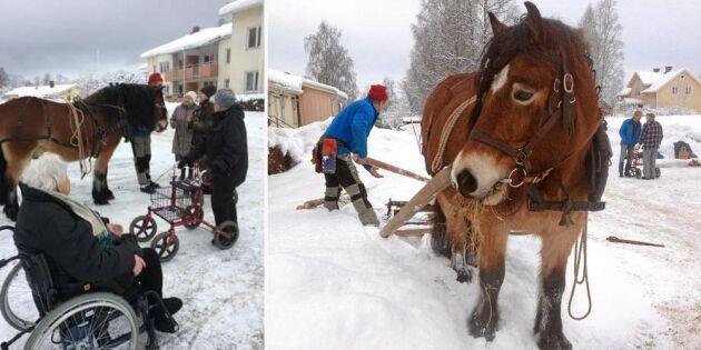 Kajsa tog hästen till äldreboendet – bjöd på uppvisning