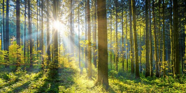 Värna det aktiva och hållbara skogsbruket