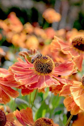 Solbrud har charmiga blomkorgar som lockar många besökare.