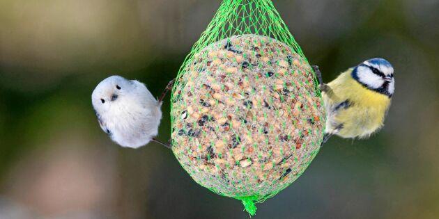 Veterinären: Talgbollar livsfarliga för fåglar och hundar!