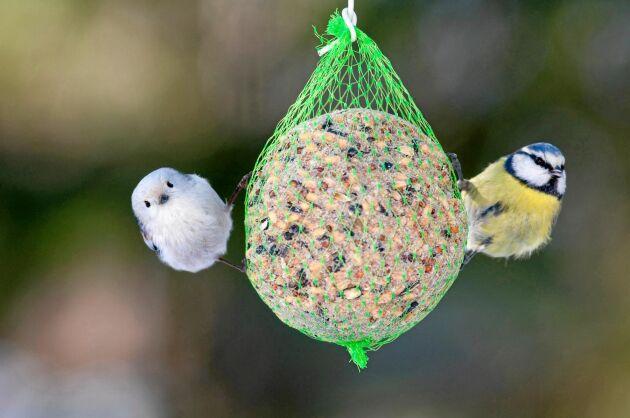 Skydda fåglarna – och hundarna – från plastnätet runt talgbollarna.