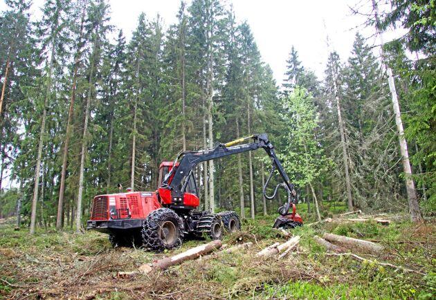 Avverkningen har varit hög i de finska skogarna i år, och skogsägarnas intäkter rekordstora.