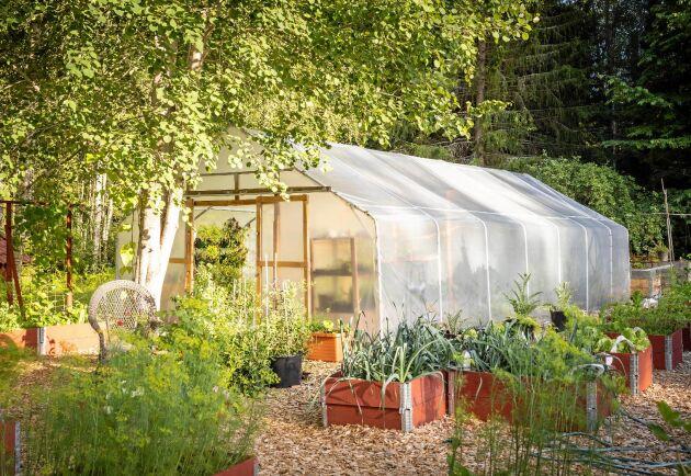 Tunnelväxthuset Växa från Gjordnära smälter in bland pallkragarna i en odlarträdgård.